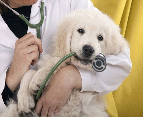Veterinarians promote pet care - The Journal of Sonora 1